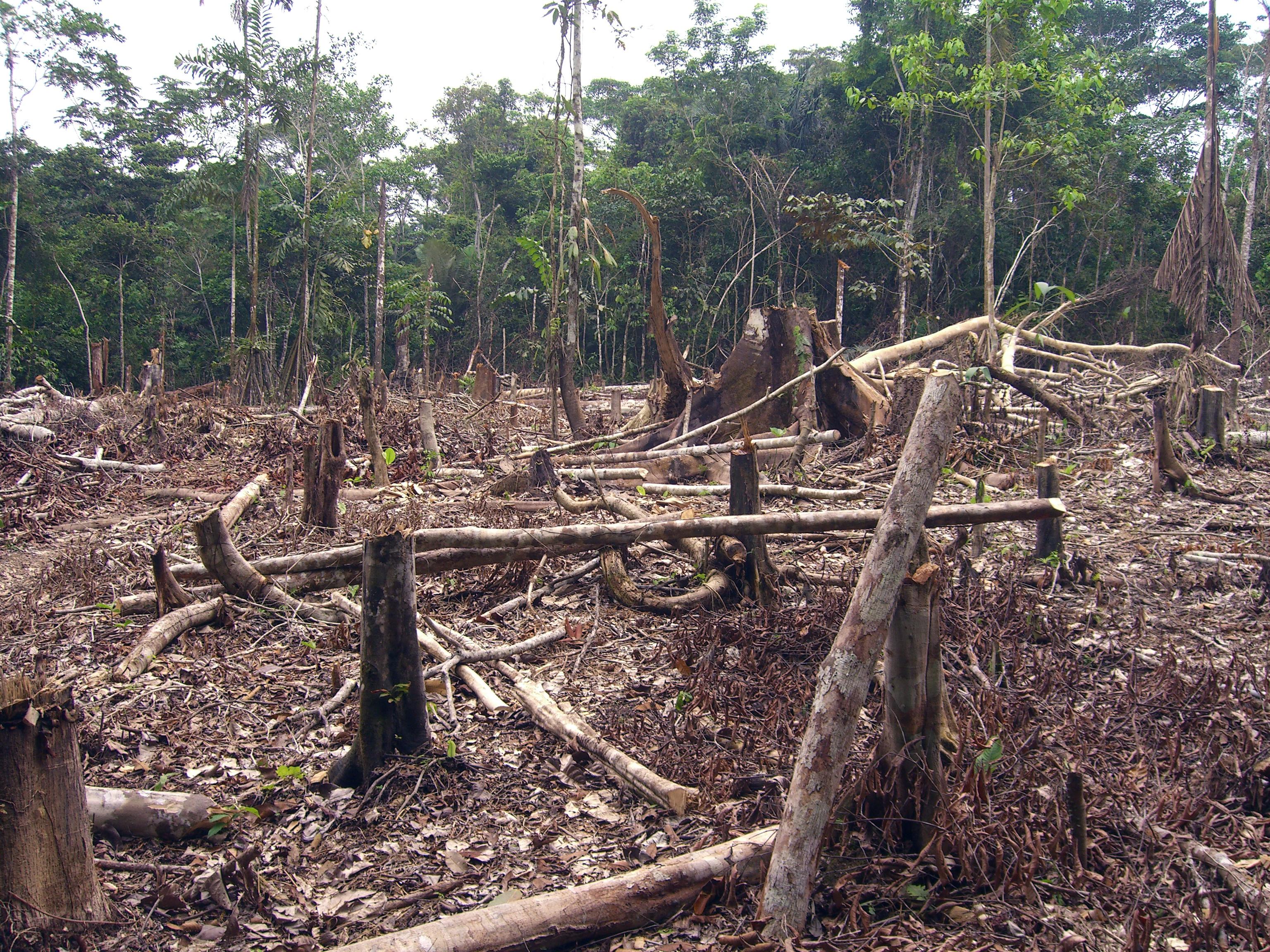 Wie die grösste Freihandelszone der Welt das Klima zerstört
