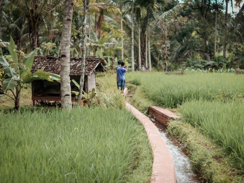 Fairer Handel statt Freihandel: Ja zum Abkommen mit Indonesien